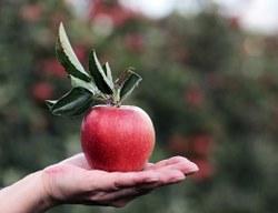 Appel à projets - Soutenir la relocalisation de l'alimentation en Wallonie