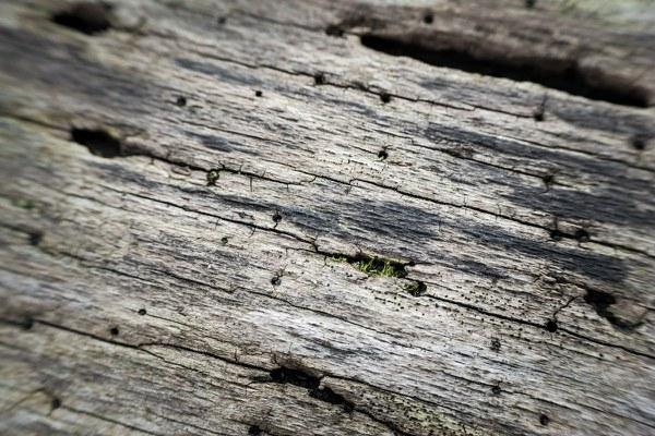 bark 1319098 1920
