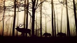 Circuler en forêt en Wallonie