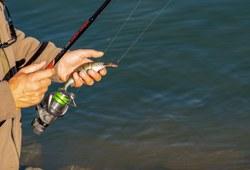 Délivrance en ligne des permis de pêche