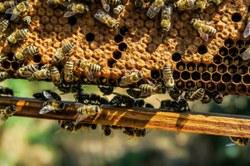 Important pour tous nos apiculteurs : foyer de loque américaine détecté à Prouvy, zone de protection de 3km